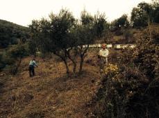 Christian bei der Oliven-Ernte