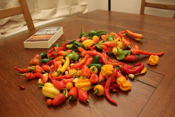Das kommt in den Topf: eine Bunte Vielfalt von Chilis aus dem Garten
