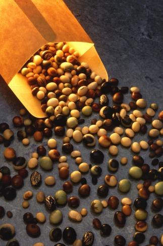 Soybeanvarieties Kopie
