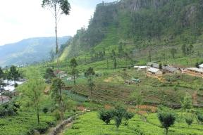 Eine Teeplantage auf Sri Lanka in der Nähe des Lipton Seats.