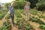 In Lawrence Garten in Nuwara Elia. Hier seht ihr ein Erdbeerfeld