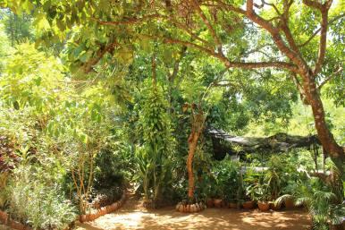 Ein wunderschöner Waldgarten
