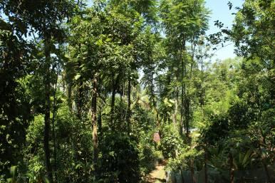 Dieser Waldgarten wirkt fast wie ein Dschungel