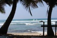 Surfer und Palmen gibt es viele auf Sri Lanka
